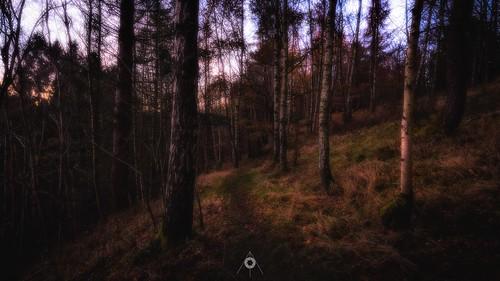 autumn canon colours fall forest hdr landscape leefilters longexposure nature perthshire scotland sunset trees woodland