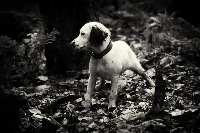 Rupert Bear in the woods
