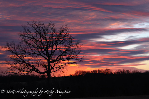 sunset color tree clouds canon50d yourbestoftoday
