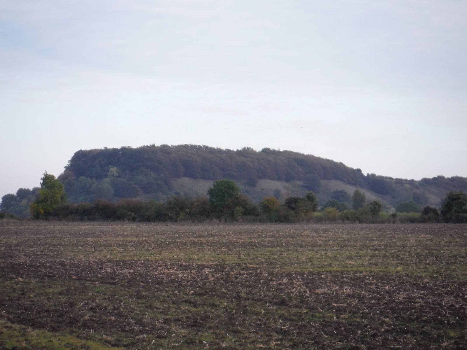 Sharpenhoe Iron Age Hillfort Site, from near Harlington SWC Walk 229 Leagrave to Harlington