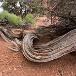 Dead tree, Arches
