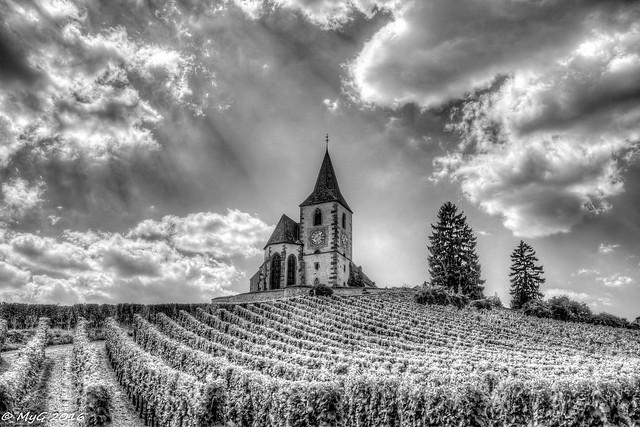 Il faut garder l'église au milieu du vignoble.  Hunawihr , Alsace , France
