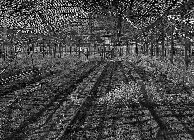 Deserted Greenhouse ...