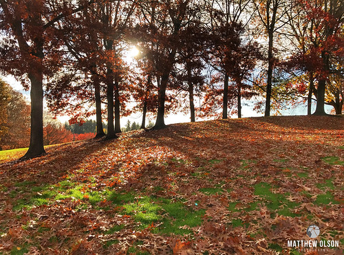 fall autumn leaves trees sunrise green orange outdoors