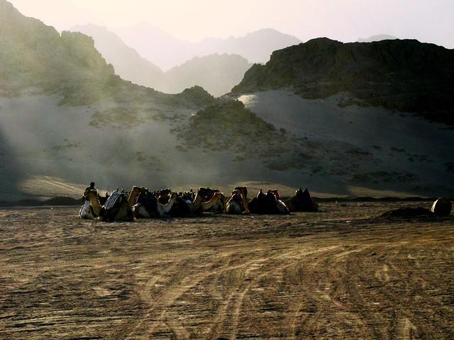 una pausa nel Deserto del Sinai, Egitto
