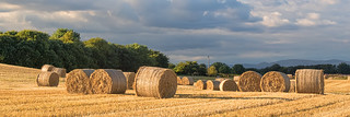 2015-09-16 (Day 259) Baling | by atp