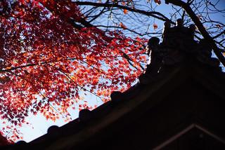 Daylight@Shinjyuku_Tokyo_027