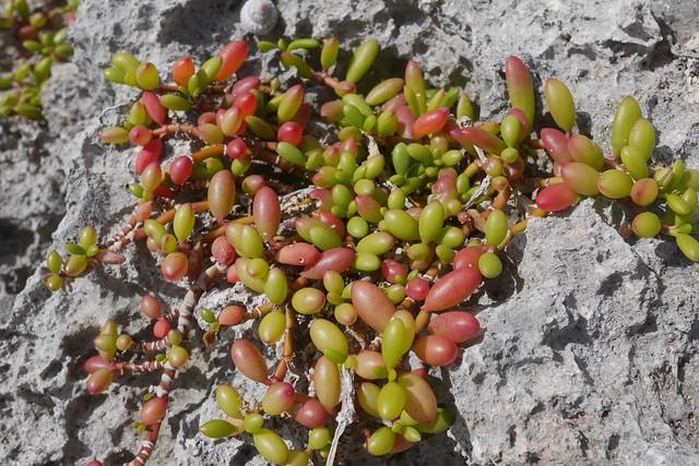 月, 2015-12-07 08:05 - 海岸に生える植物
