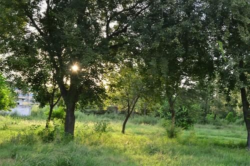 morning trees light sun nature grass sunrise