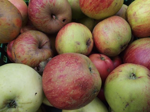 Belle de Boskoop apples