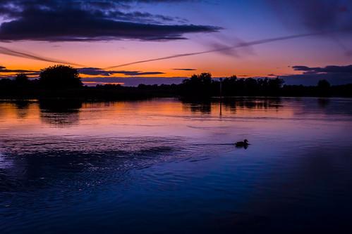 duck sunset shannon river shannonbridge offaly ireland wake