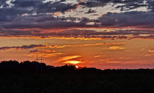 sunset summer night crows