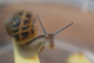 introducing our latest pet:  Bob the Snail | by Los Liffords de Tejas