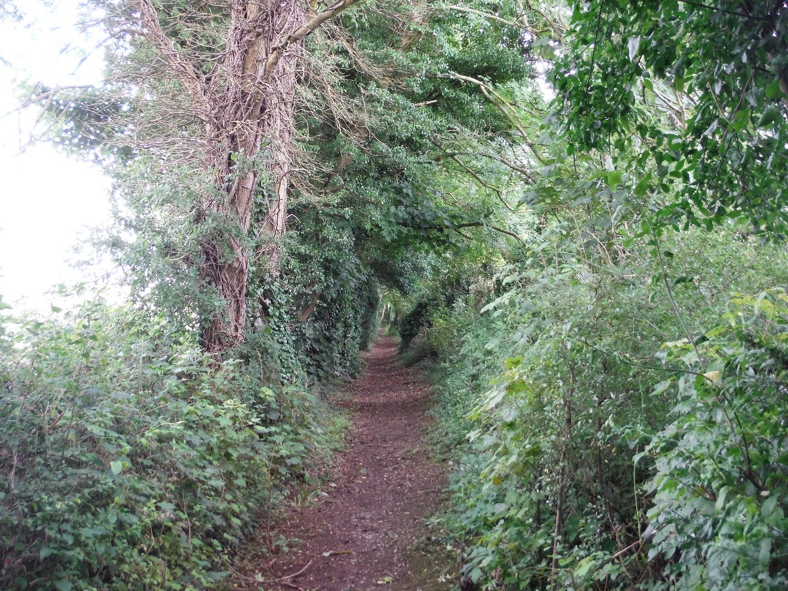 After-lunch towards Berwick St. Leonards SWC Walk 248 Tisbury Circular via Hindon