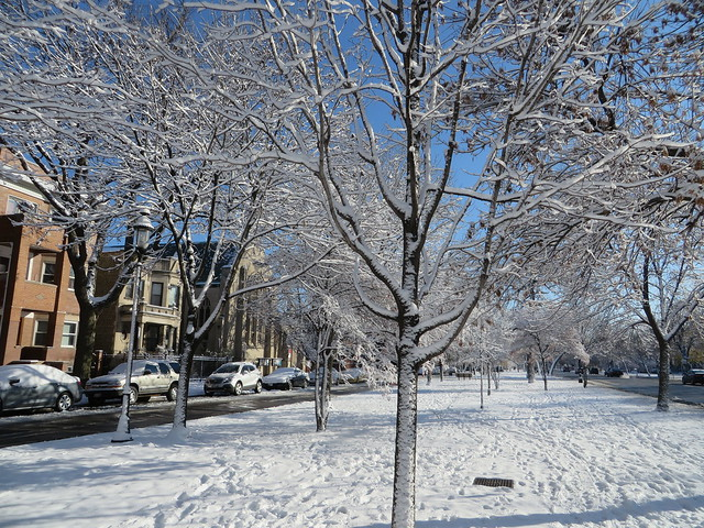 First Snow- Fall 2015