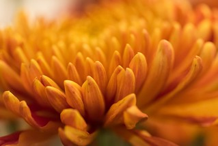 Dreamy orange ... | by soomness