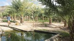 Djibouti_2014 - Oasis de Daïmoli
