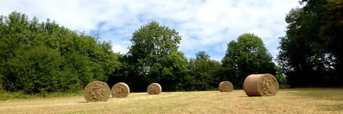 trees ireland panorama irish field rural landscape countryside circles cork scenic hay bales newmarket iphone5 115picturesin2015 2015onephotoeachday 115picturein2015
