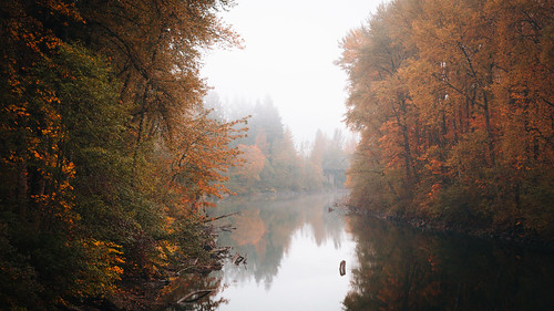 autumn fall autumncolors water river trees fog foggy nature pacificnorthwest canoneos5dmarkiii johnwestrock canonef2470mmf28lusm washington wallpaper background