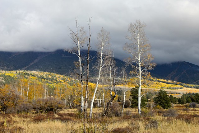 The color of autumn in northern Arizona, clouds consuming the San Francisco Peaks.