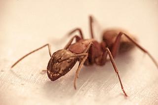 ant | by Kurt:S