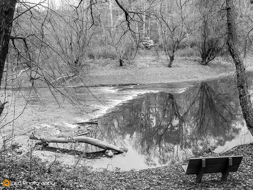 trees blackandwhite bw water monochrome landscape lumix mono outdoor northcarolina panasonic murphy valleyriver fz200