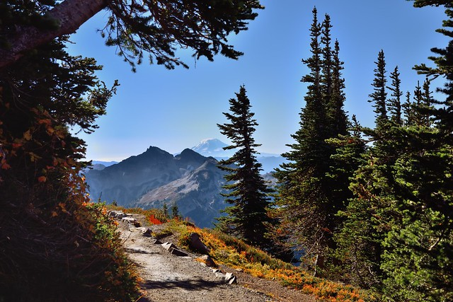 A Walk in the Wood Along the Skyline Trail (Mount Rainier National Park)