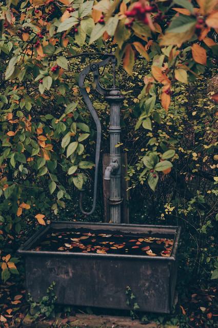 In the secret garden