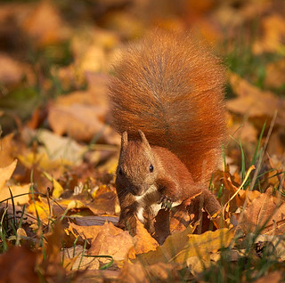 Searching in leaves | by hedera.baltica