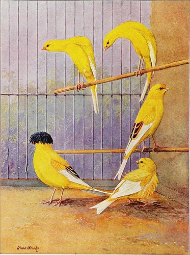 "Image from page 331 of ""[Articles about birds from National geographic magazine]"" ([19--?]-[193-?])"