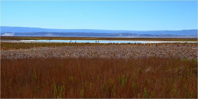 A proximité de cette laguna Céjar se trouve la laguna Piedra, accessible aux baigneurs. On y flotte aussi bien que sur la Mer Morte à cause du taux élevé en sel. Nous allons nous baigner aussi, je vous montre cela demain.