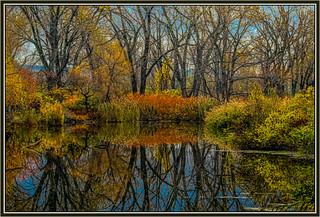 Tifft Nature Preserve | by David Fehrman