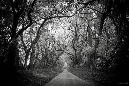 mountharmon plantation maryland easternshore md dirt road street path trees tree lined leading lines spooky blackandwhite bnw bw