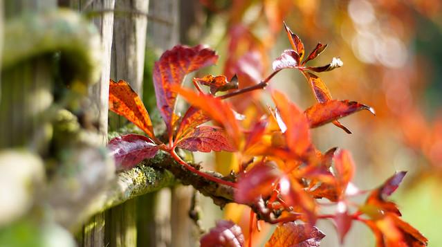 Farbenspiel am Zaun