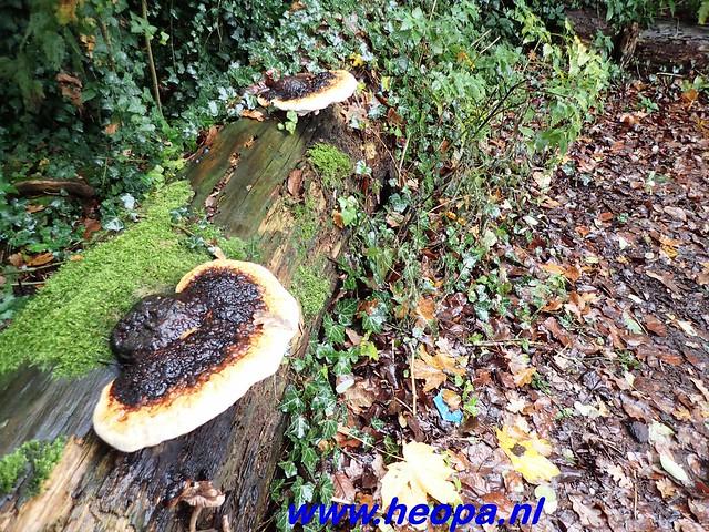 2016-11-09  Gooimeer tocht   25 KM   (78)