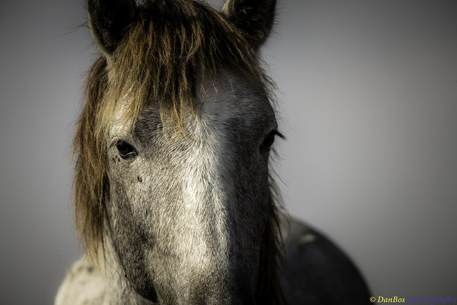 Horse in Camargue - Portrait