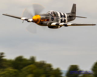A NORTH AMERICAN P-51B MUSTANG JUST ABOVE SOME SKAGIT TREES