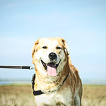 2011-09-11_13-57-06 - Dog Bokeh - Fehmarn - Schleswig-Holstein - Germany