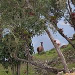 Sa, 29.08.15 - 14:02 - Kuelap - Ruine der Chachapoyas