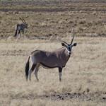 Čt, 03/29/2012 - 08:32 - Afrika 2012