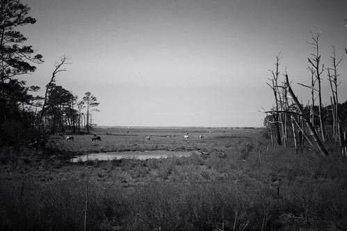 chincoteague-14 | by lifeinthedistrict