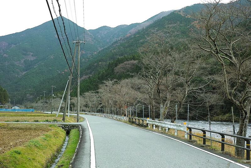 長谷の桜並木