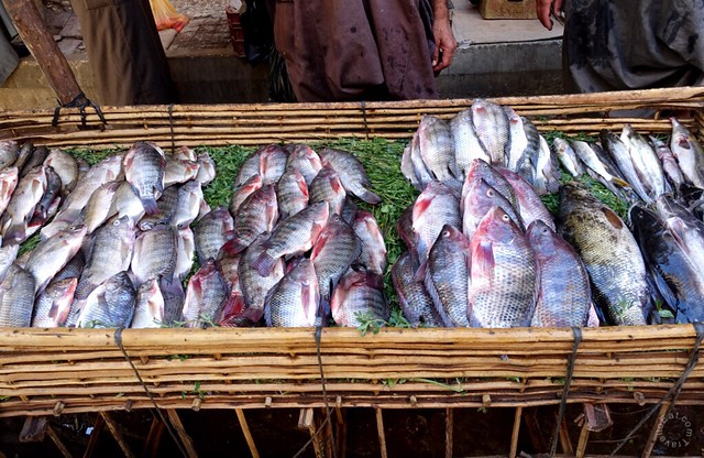 Small Nile Perch (Lates niloticus) left, Nile Tilapia (Oreochromis niloticus) right. Luxor Souk, Egypt