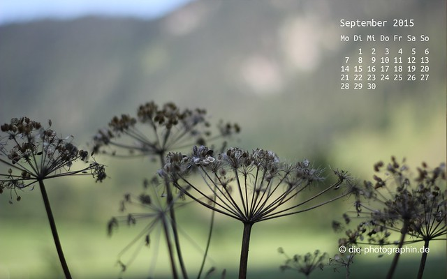 verblueht_september_kalender_die-photographin