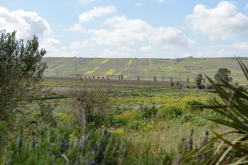 italy landscape europe wine sicily mazaradelvallo ajello