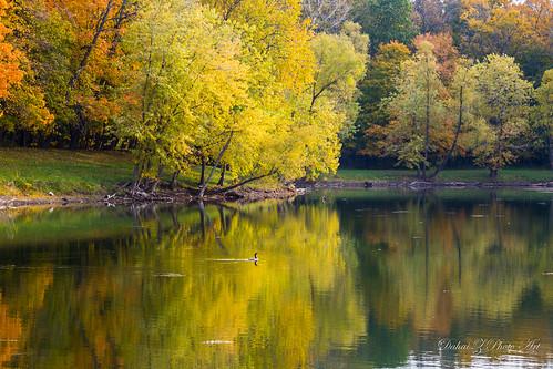 morning reflection bird water forest illinois pond autumncolors cormorant cookcountyforestpreserve canonef24105mmf4lisusm potawatomiwoods wheelingillinois canoneos6d lakepotawatomi autumn2015