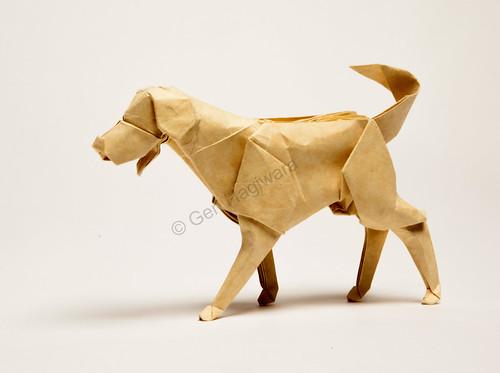 Labrador Retriever by Gen Hagiwara   by N. Terry
