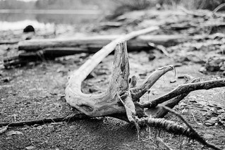 Driftwood | by chrism229