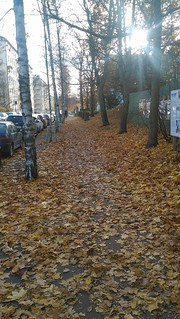 Leaves path