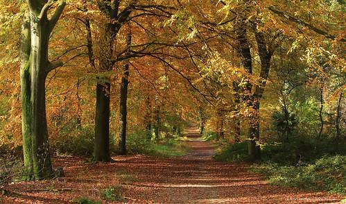 autumn trees fall nature yellow forest jaune automne canon landscape belgium belgique naturallight arbres paysage forêt lumièrenaturelle canoncamera canonlens telephotozoomlens télézoom